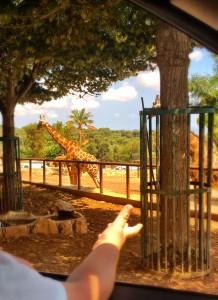 Marci e una giraffa!